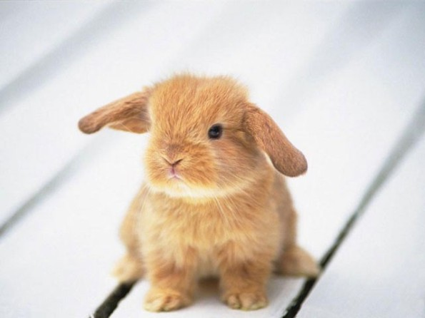 Baby Bunny Picture From Christopher's Blog