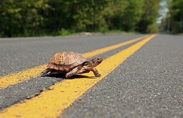 turtle-crossing-road-all-lives-matter